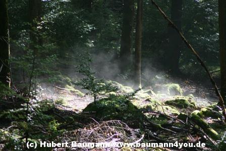 Spessart-Herbstnebel-014[1]