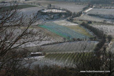 Blick auf die Weinberge vom Kahlenberg / Wien