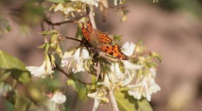 Heidelberg - auf dem Philosophenweg - Schmetterling