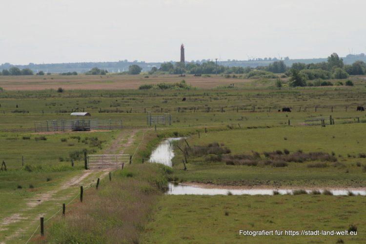 Wasservogelreservat Wallnau / Insel Fehmarn / Vogelfluglinie